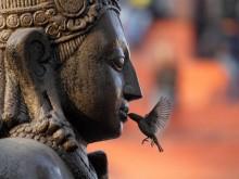 PENSIERI BUDDHA*